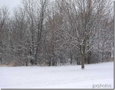 jprphotos_winter_trees
